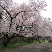 福岡城さくらまつり   毎年ライトアップの方法が変わります
