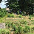 写真:和泉川水緑のウォーク