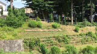 和泉川水緑のウォーク