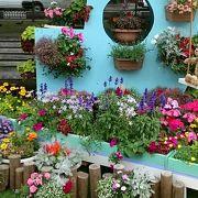 素敵な花壇がいっぱいの「花フェスタ2016」