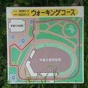 大きな公園です