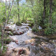 五花海から流れ出た水が木々の間を流れます