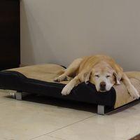 コンシェルジュに大人しい犬がいた。