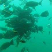 水深8mで海中見学