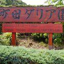 町田薬師池公園四季彩の杜ダリア園(町田ダリア園)