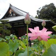 「法金剛院」の蓮の花の見頃は祇園祭と重なります