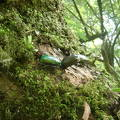 今年も樹液採集・灯火採集に参加して昆虫をゲットしました