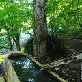 森の中に点在する貸切風呂