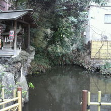 徳川家康が、鷹狩の際、鞭を洗ったとされる策の池の様子です。