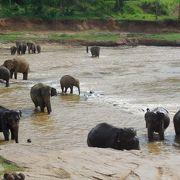 川での象の群れの水浴びが見られる