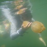 クラゲと戯れるのは、楽しいです。まちがいない。