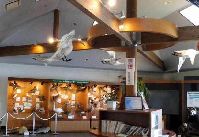 クッチャロ湖の湖畔にある、水鳥や湿地を紹介するセンター