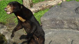 象のショーも見れる ホーチミンにある動物園