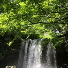 乙女の滝(夏)