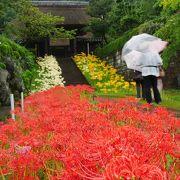 【西方寺】赤、白、黄色の彼岸花