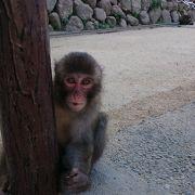 猿がたくさん
