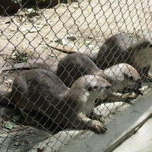 タマウ動物園(プノンタマオ野生動物救護センター(Phnom Tamao Wildlife Rescue Center)