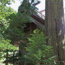 本殿と大杉