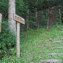 森の中の登山道でした