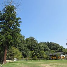 屋島寺庭園(雪の庭)