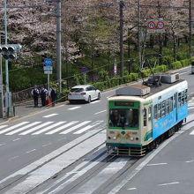歩道橋からの桜並木と都電電車