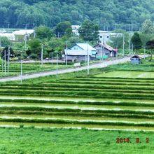 緑いっぱいの田園風景が広がる