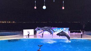 マリンワールド海の中道 「夜の水族館」