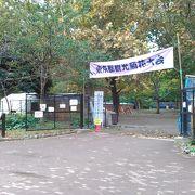 曰比谷公園で菊花大会
