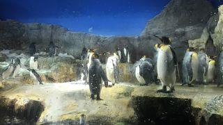 広い水族館