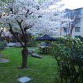 中庭に桜が咲いてました(o'∀'o)