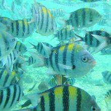 海の中はものすごい数のトロピカルフィッシュが泳いでいます。