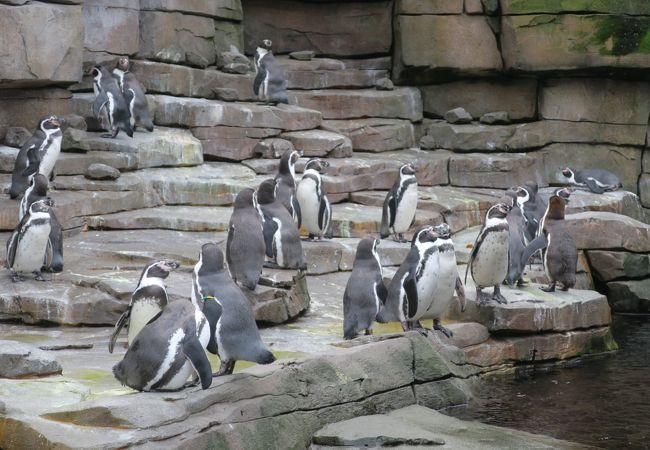 ハーゲンベック動物園