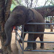 象を近距離で見ることができる
