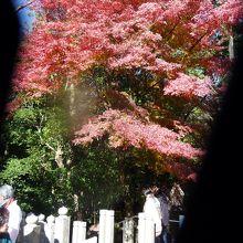 本堂へ向かう石の階段は、紅葉真っ盛り