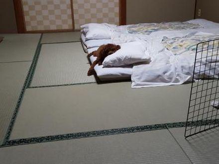 いつも一緒 ペットと泊まれる宿 だいこく館 写真