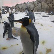 ペンギンがかわいい
