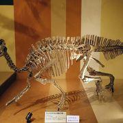 恐竜の実物化石もある!