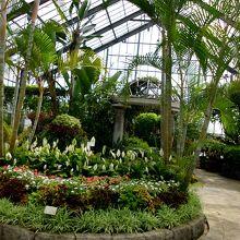 温室内の南国産植物