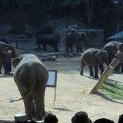 象乗りと象のサッカーが有名です。