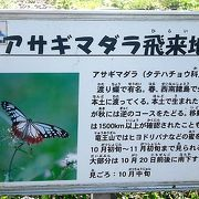 サワヒヨドリの群生地にはアサギマダラが飛来してきます