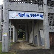 奄美の海に関することがいっぱい展示されてます。