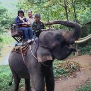 象、水牛、筏のアドベンチャー体験