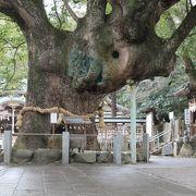 神木の大きさにびっくり