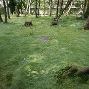 庭の苔が見事