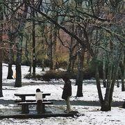 冬の景色!