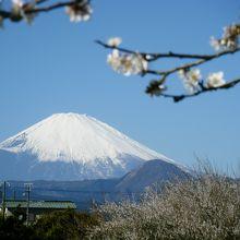 富士の景色は最高