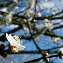 咲き始めの枝