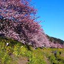 みなみの桜 (青野川千本桜)