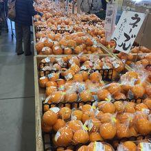 柑橘類がたくさん