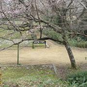早咲きの桜も見事でした